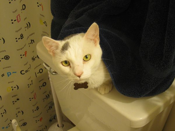 android-cat-in-the-bathroom