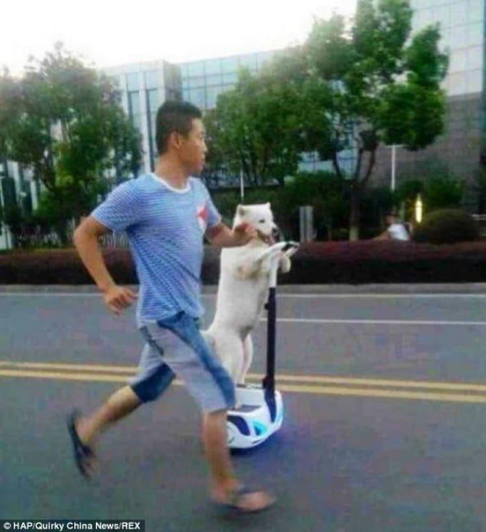 セグウェイと犬と男性