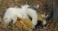 猫と鳥も犬と猿も仲良し、Googleの動画「Android: Friends Furever」が話題