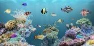 アプリ「aniPet海洋水族館ライブ壁紙」スマホで熱帯魚を育てよう #Android