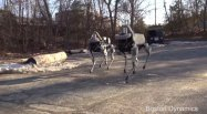 【動画】蹴っても倒れない、Googleの新型ロボット「Spot」が公開