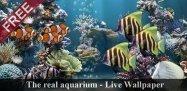 アプリ「本物の水槽-LWP」無料なのに超リアル、スマホで熱帯魚が飼えるライブ壁紙 #Android